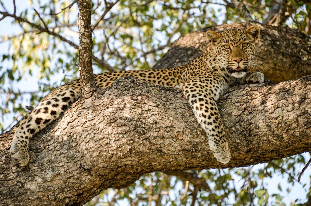 Sydafrika er perfekt til safarier og badeferie