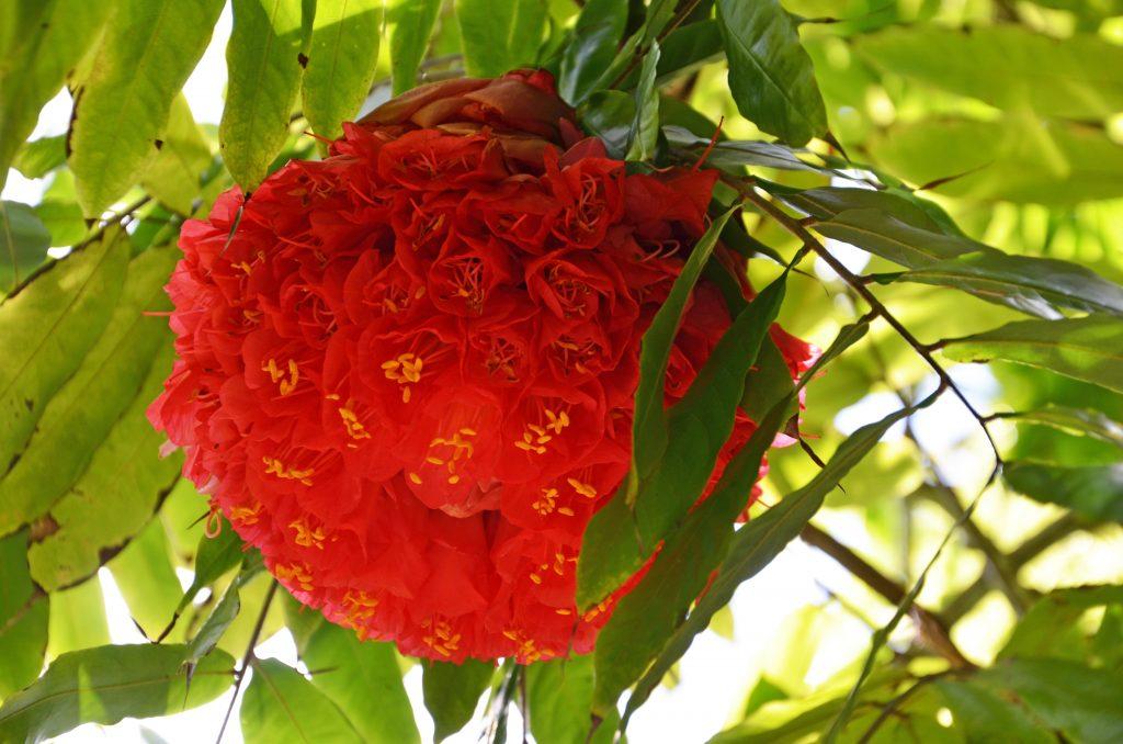 På strandferie i Mauritius ser du også en et smukt og varieret planteliv